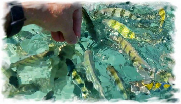 Hand feeding fish on the island of Ko Yuak